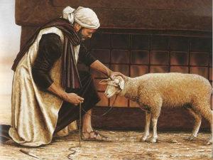 man sheep lamb korban pesach