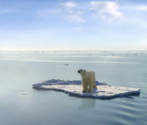 polar-bear-ice-water